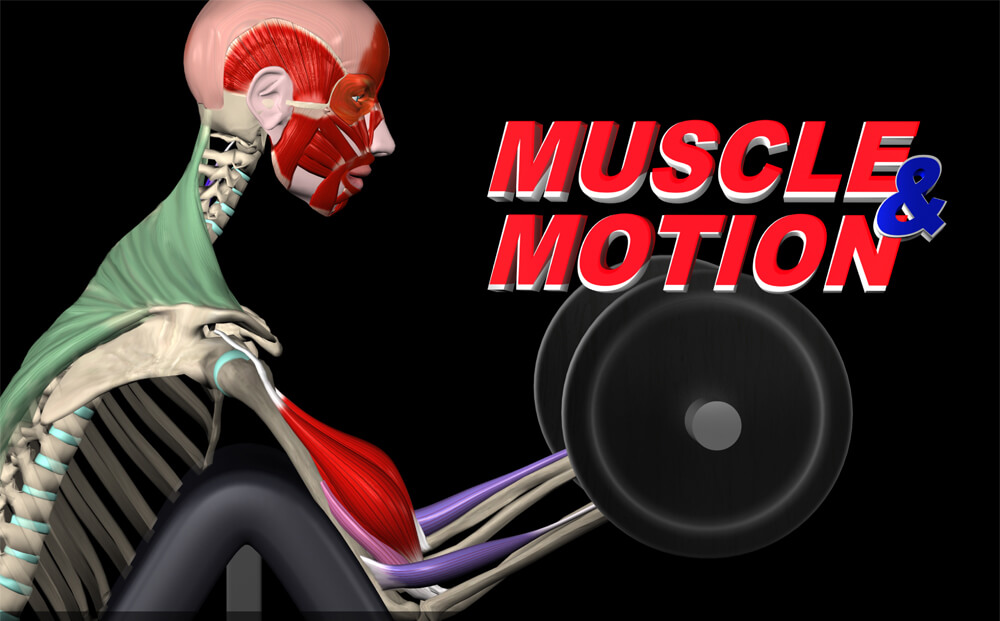 interactive anatomy - muscles in motion - infofit, Muscles