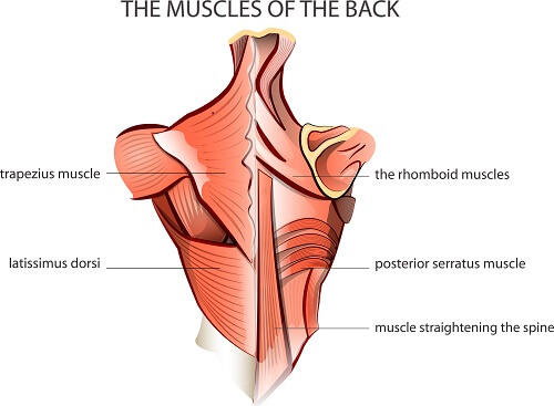 shoulder pain exercsies