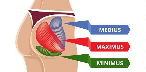 Glute Medius Muscle